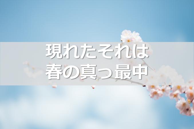 hashimoto-mailmagazine7