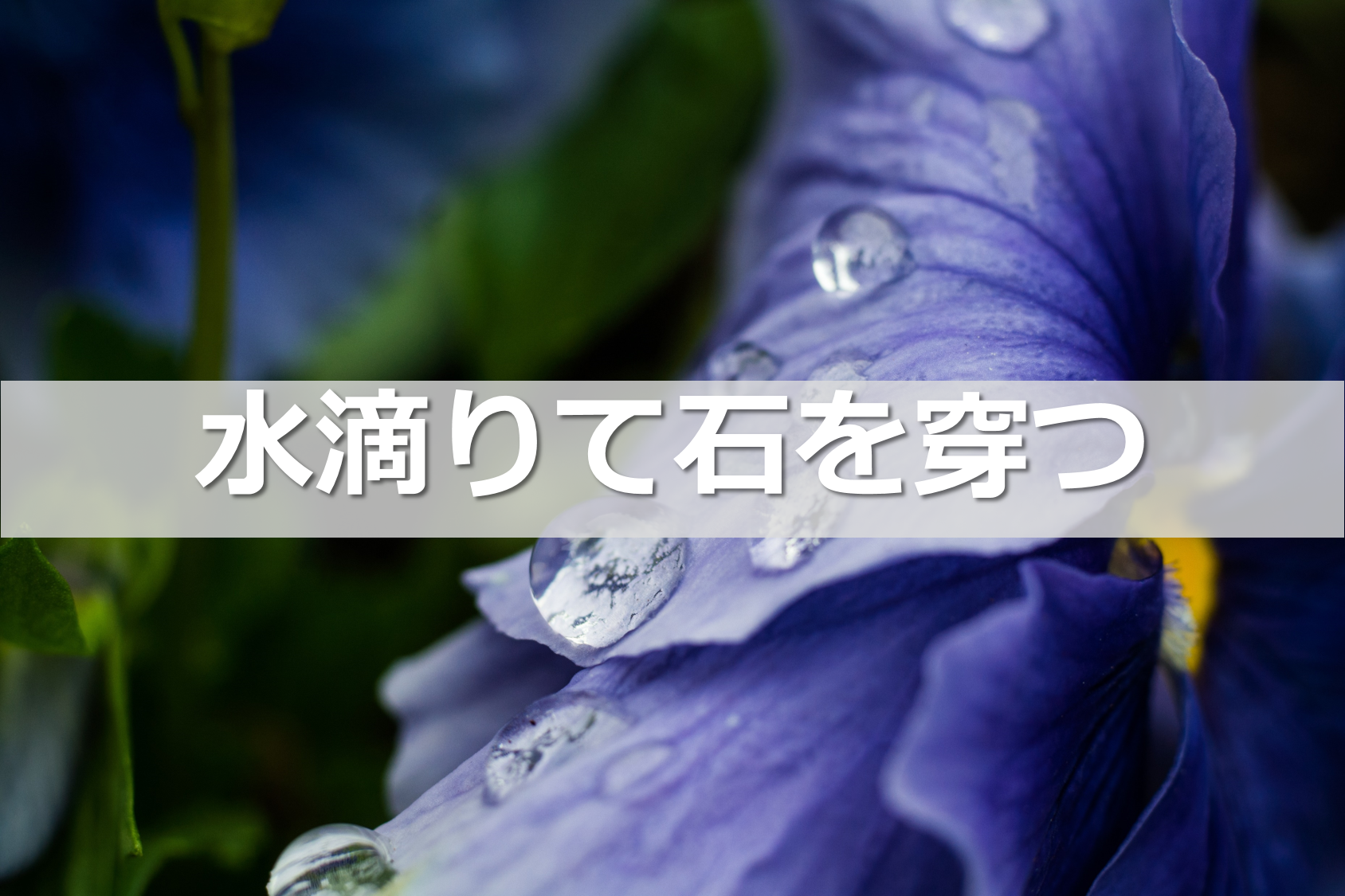 hashimoto_mailmagazine