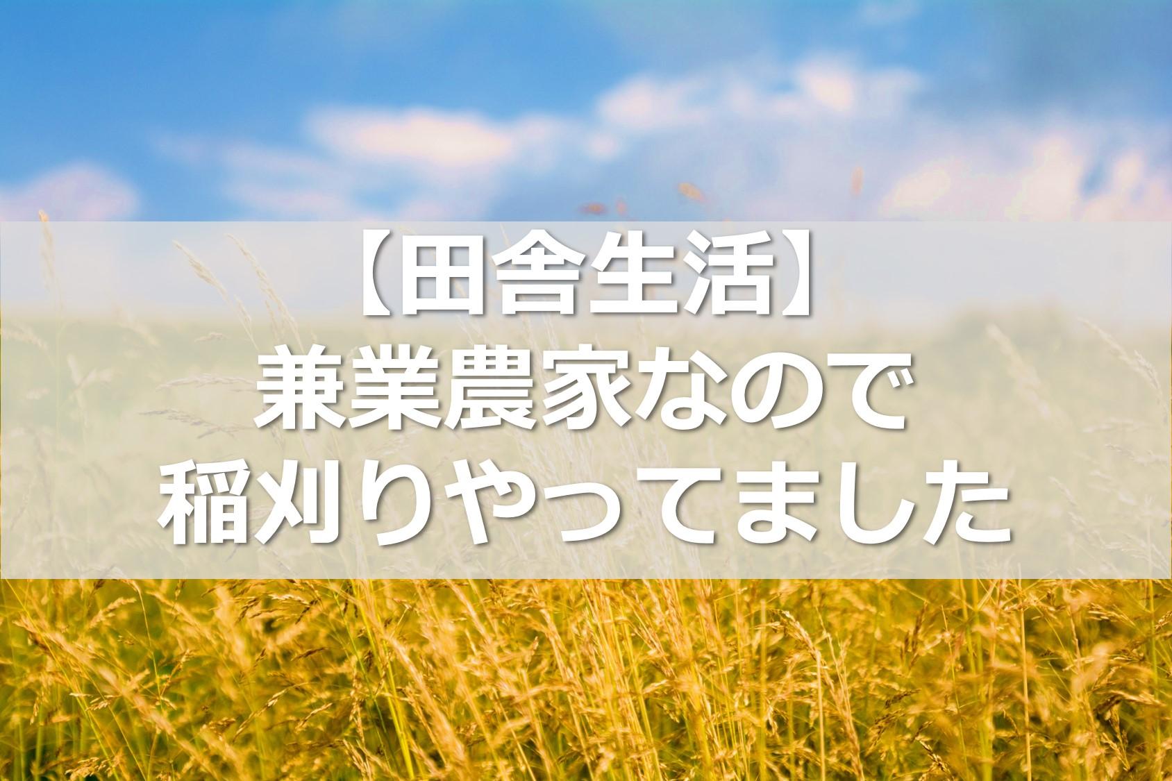 【田舎生活】兼業農家なので稲刈りやってました