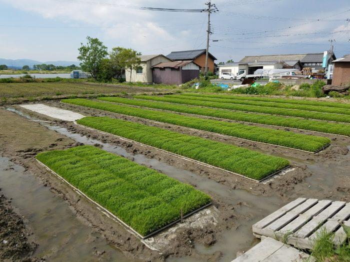 nawashiro