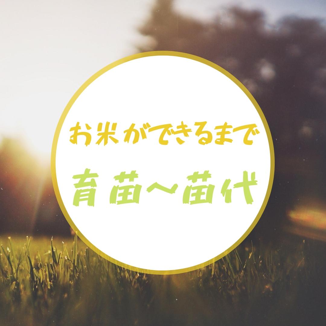 【田舎の米づくり】お米ができるまで(育苗~苗代編)