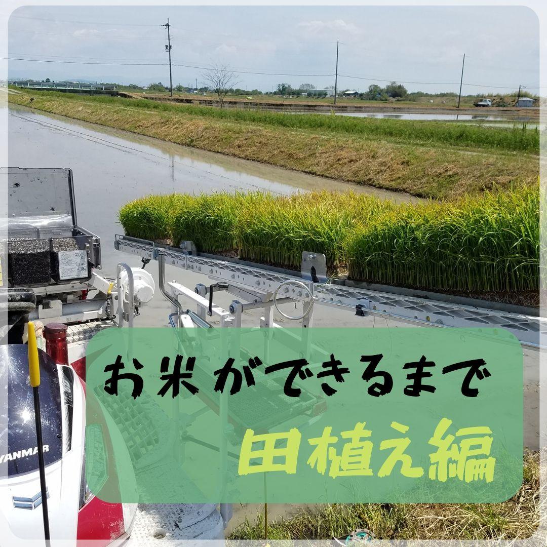 【田舎の米づくり】お米ができるまで(田植え編)